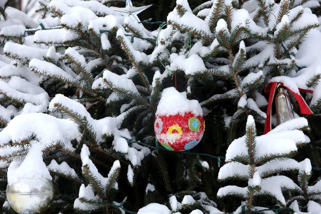 A pine tree near Roush Hall is covered by snow on the Otterbein University campus  in Westerville on Christmas Day 2020.