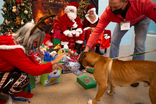 Santa Claus and Mrs. Claus, played by Cape Coral Animal Shelter Facilities Manager Miguel Medina and his wife Rachel McGowen, hand out treats and presents to the cats and dogs at the Cape Coral Animal Shelter with help from shelter volunteers and staff, Friday, Dec. 25, 2020, in Cape Coral.