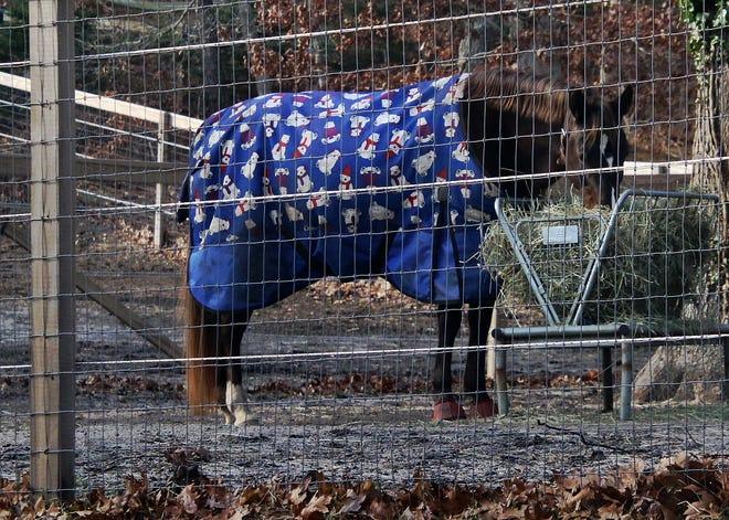A horse at Anchor Watch Farm in Wellfleet wears festive attire during the holiday season .