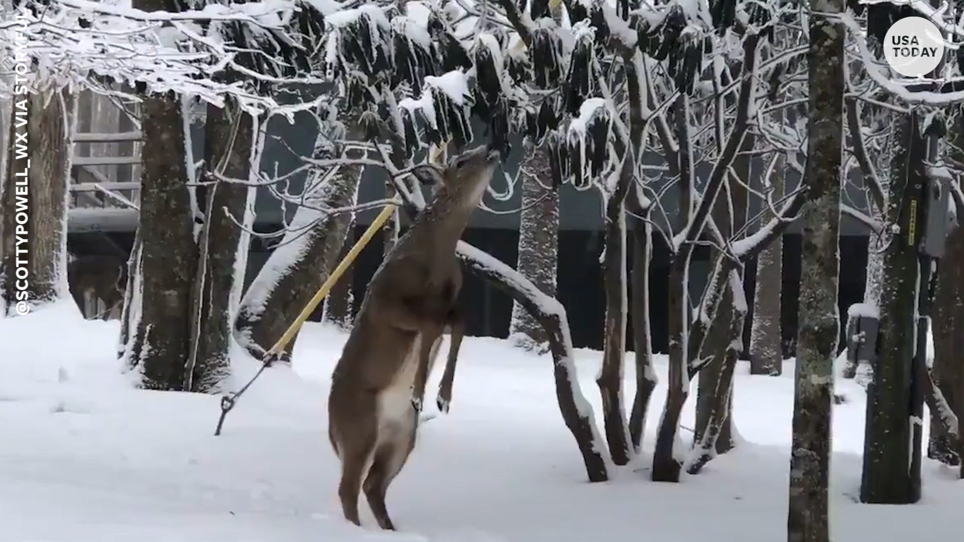 Hungry deer served frosty surprise