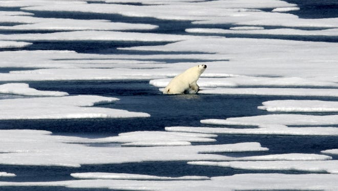 In this 2017 file photo, a polar bear climbs out of the water to walk on the ice in the Franklin Strait in the Canadian Arctic Archipelago. Climate scientists point to the Arctic as the place where climate change is most noticeable with dramatic sea ice loss, a melting Greenland ice sheet, receding glaciers and thawing permafrost.