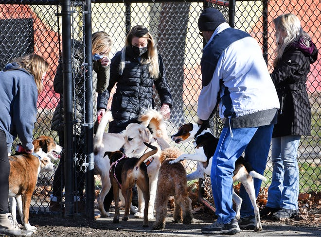 WORCESTER - The dog park at Beaver Brook Park was busy Sunday. Dogs entering the park are warmly greeted, with owners doing their best to keep order.