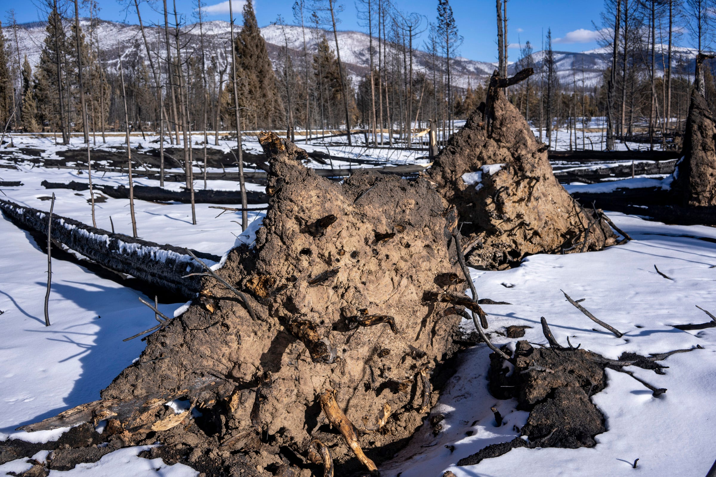 The East Troublesome Fire burned through part of the Colorado River's headwaters in Rocky Mountain National Park. The fire left charred and toppled trees beside a stretch of the river.