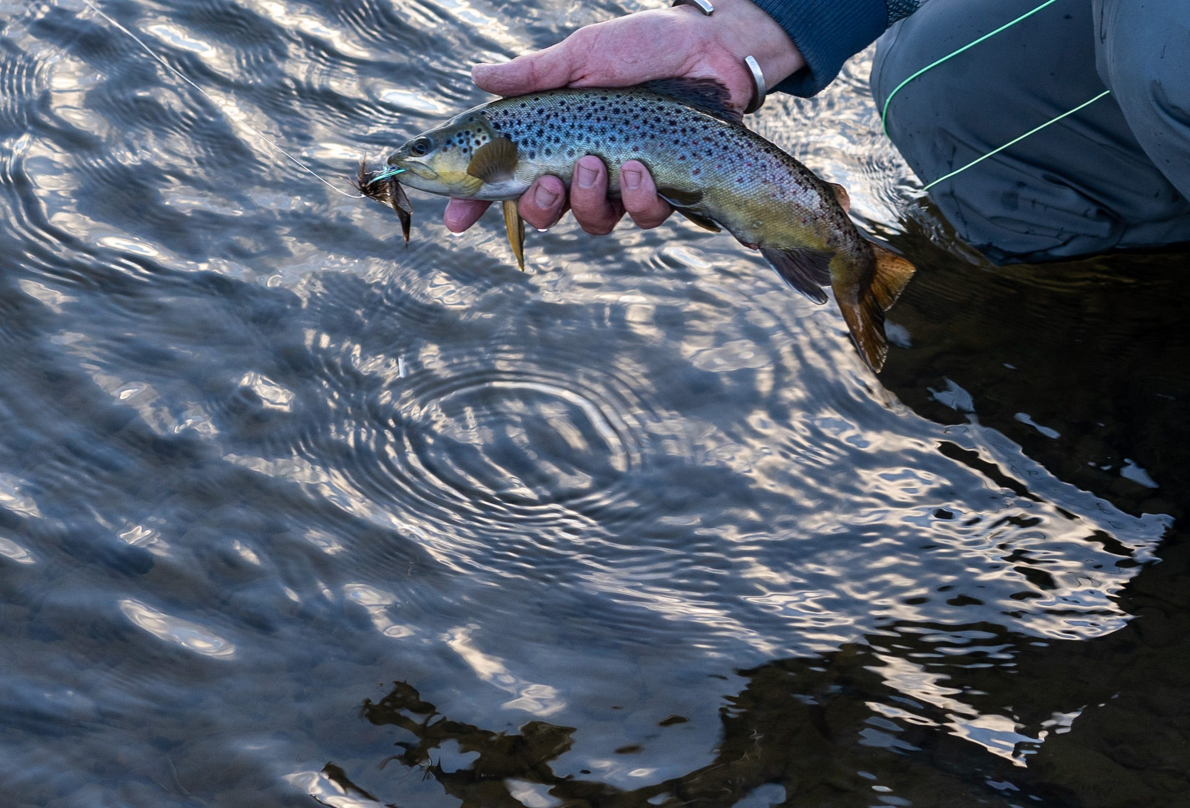 Matt Rice of the conservation group American Rivers holds a trout while fishing in the Colorado River near Kremmling, Colorado.