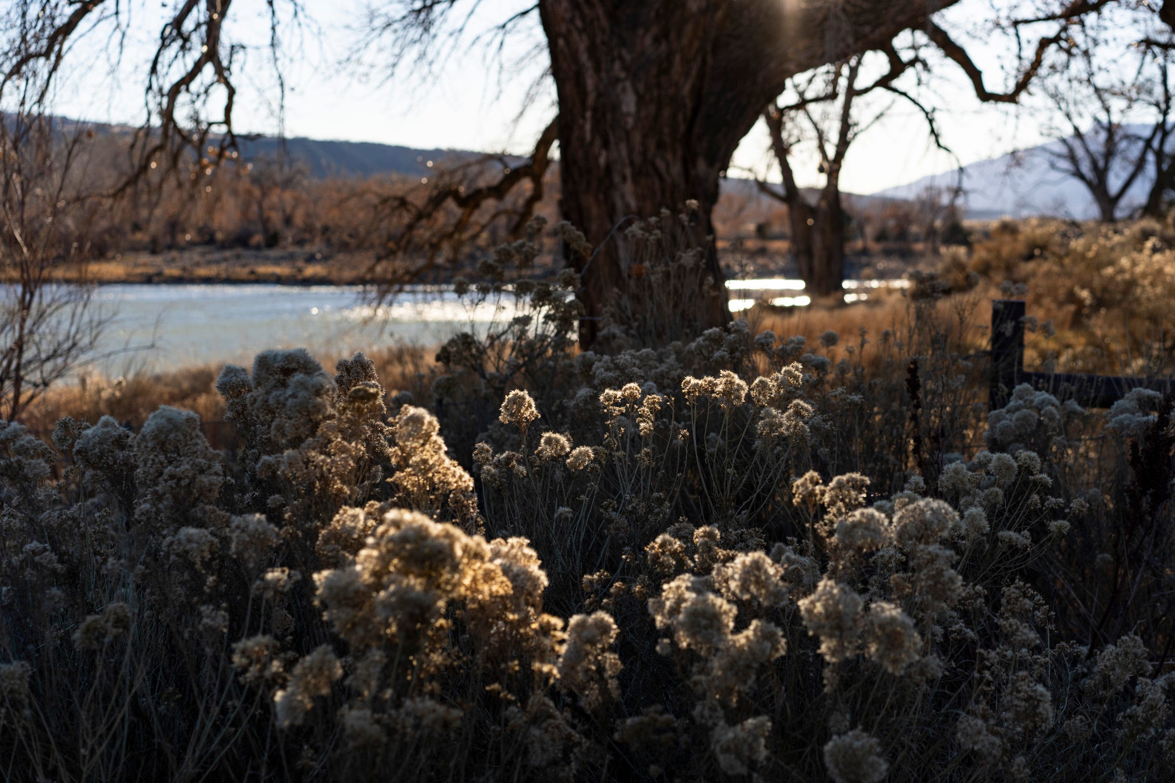 Dry brush lines the banks of the Colorado River near Rifle, Colorado. Much of the river's flow comes from western Colorado, and rising temperatures have intensified a stretch of mostly dry years.