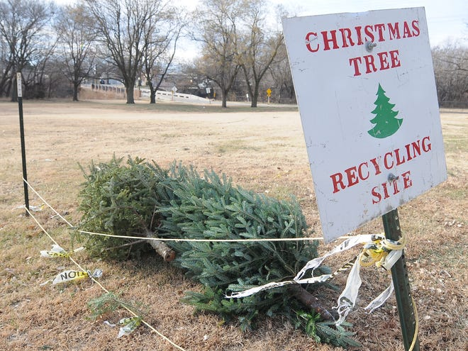Two Christmas trees were dropped off at the Lakewood ParkChristmas Tree Recycling site on Monday. The cicty will be collecting Christmas trees for theChristmas Tree Recycling Program in four Salina parksand will accept dropoffs through Jan. 31.