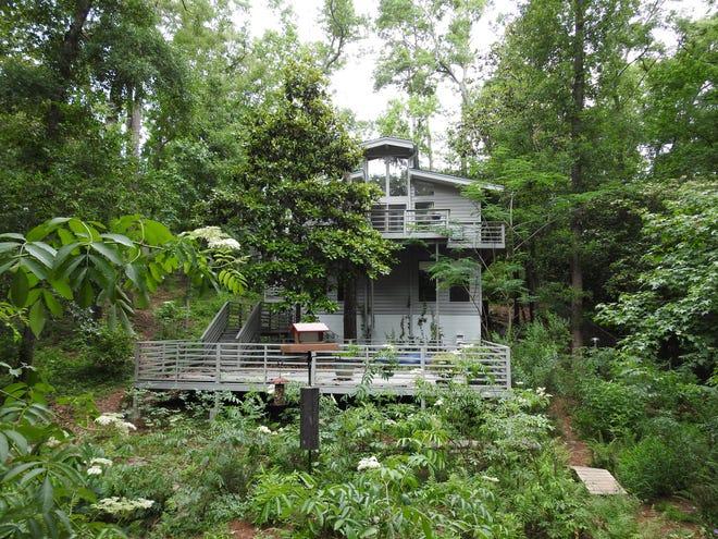 """Jeff and Ann VanderMeer have started """"rewilding"""" their Tallahassee yard."""