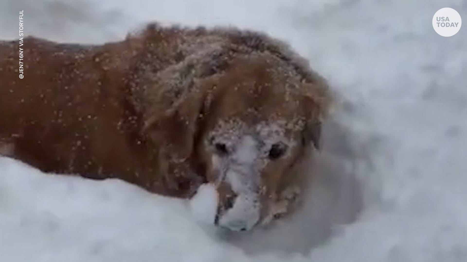 This video of dogs playing in snow will make your whole day