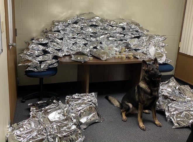 Tallmadge police K-9 Kato is surrounded by 128 pounds of marijuana and more than 500 containers of THC edibles seized Dec. 22 from a storage unit off I-76.