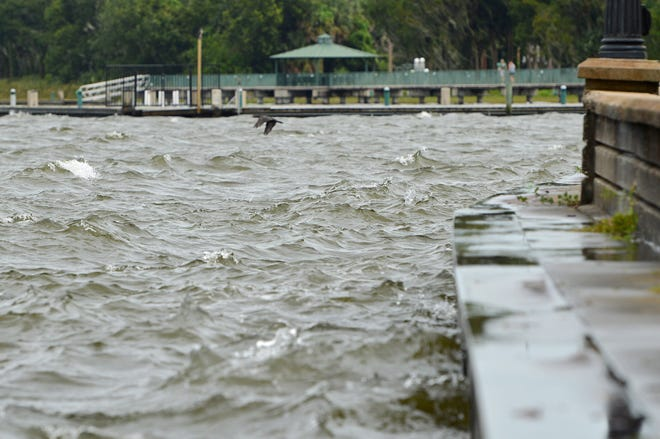 The Lake Eustis shoreline at Ferran Park in Eustis will see a cleanup effort Saturday. All volunteers are welcome.