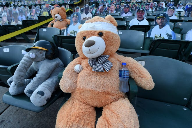 T. Bear holds a ball while sitting in his seat before the Oakland Athletics against the Los Angeles Angels game at the Coliseum in Oakland, Calif., on Aug. 21, 2020. T. Bear was drilled in the noggin with a liner off the bat of Arizona's Ketel Marte but bounced right back up with a smile on its face.