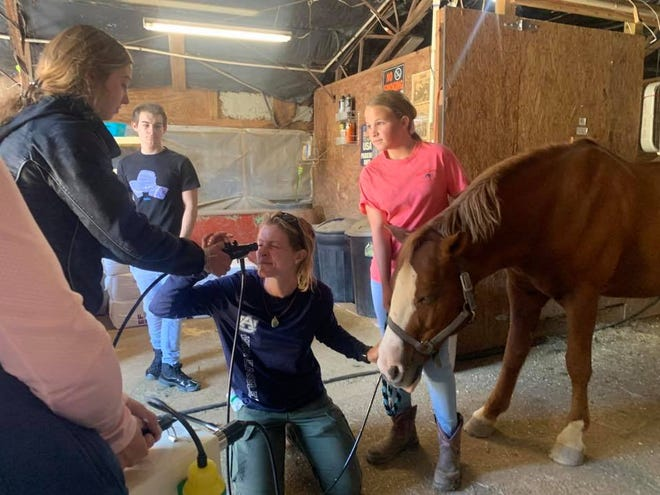 A horse that colics can show a variety of symptoms, but having a plan of action before you call your vet can save time and money, and your horse's life.