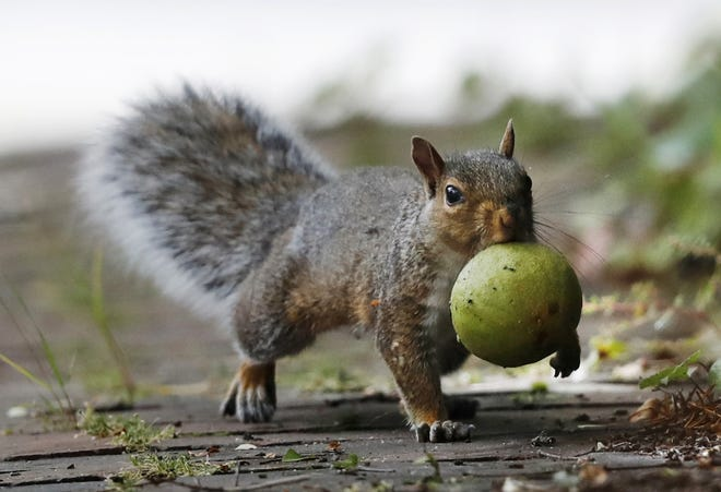 Consider feeding squirrels something they love in a location away from bird feeders.