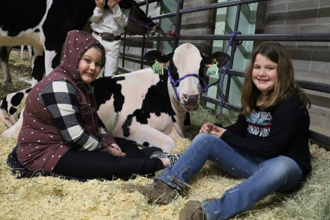 Two young exhibitors spend some down time with their dairy entry during the 2020 Erath County Junior Livestock Show. This year's show is scheduled for Jan. 5-9.