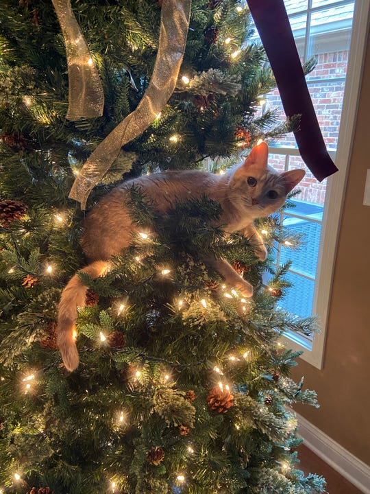 Ornament or cat, who can say?
