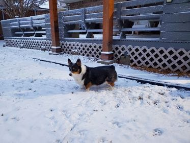 Gilberto Perez's pup plays in the snow Dec. 31, 2020 in San Angelo.