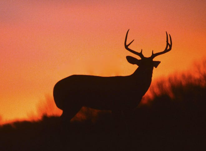 A white-tailed buck silhouetted against a sunset. Two Jefferson County teens who wounded a whitetail deer while rifle hunting in November and then filmed themselves kicking the dying animal in the head have been charged with animal cruelty.  (Dreamstime/TNS)