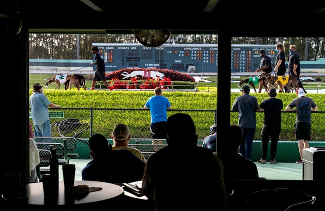 Greyhounds parade before the start of a race Thursday at the Palm Beach Kennel Club during the last day of legal dog racing in Florida.