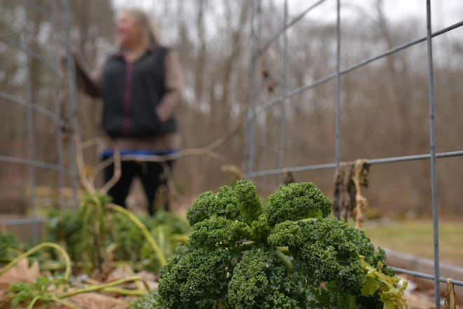Jenny Stimson stands near a raised garden bed with Kale still growing.
