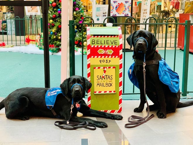 NEADS service dogs in training Ruby, left, and Bruce Wayne.