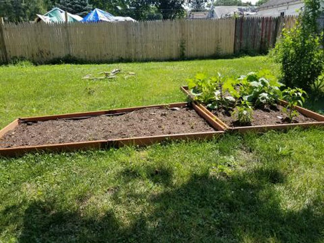 Strawberries and pineberries started in a newly started fruit garden connected to a vegetable garden. Tart Cherry trees to be planted in marked grassy area.