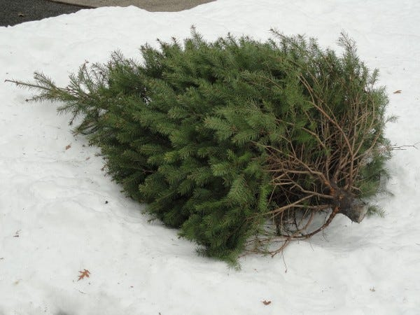 Trees and greenery should be placed by the curb by 7 a.m. on Jan. 13 to assure pickup.