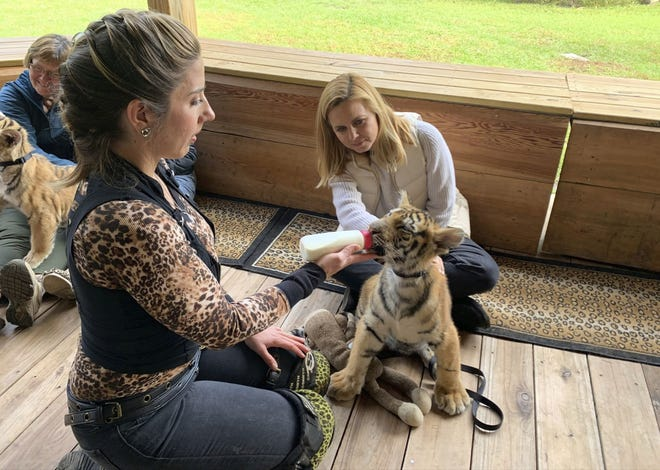 """Mariana van Zeller, background, watches a tiger cub as the animal is fed by a handler at Myrtle Beach Safari during van Zeller's """"Trafficked with Mariana van Zeller"""" series, which airs on National Geographic channel."""