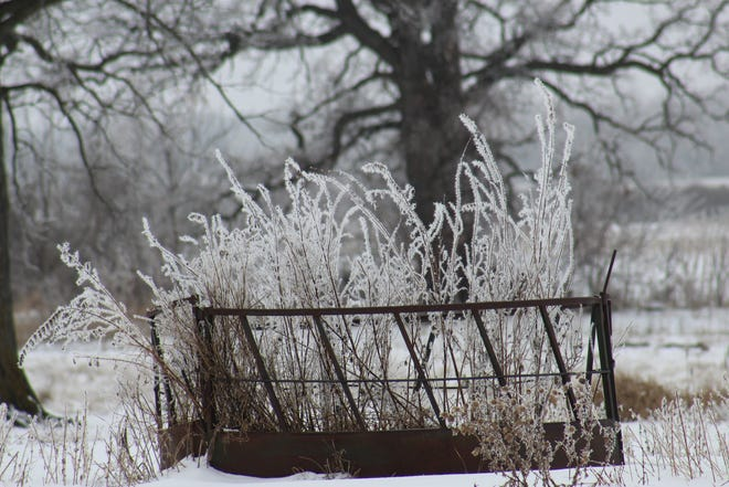 Dried fall foliage growing in this empty hayrack is decorated with rime ice often mistaken for hoar frost.