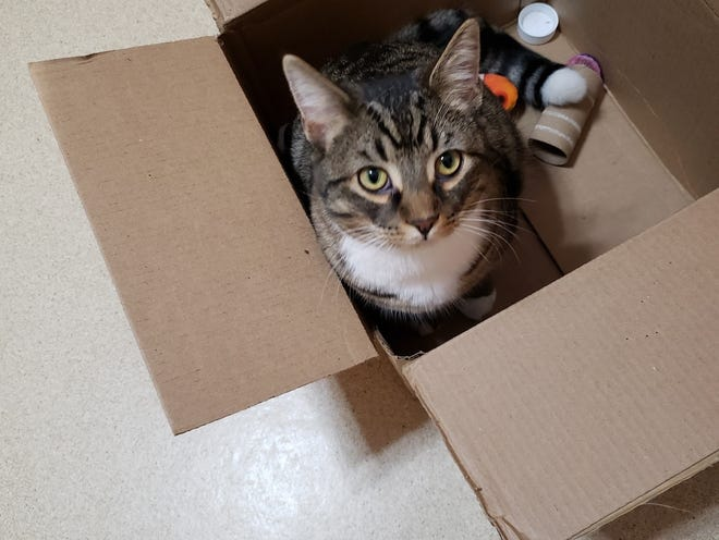 Car-E sits inside a box with his toys.