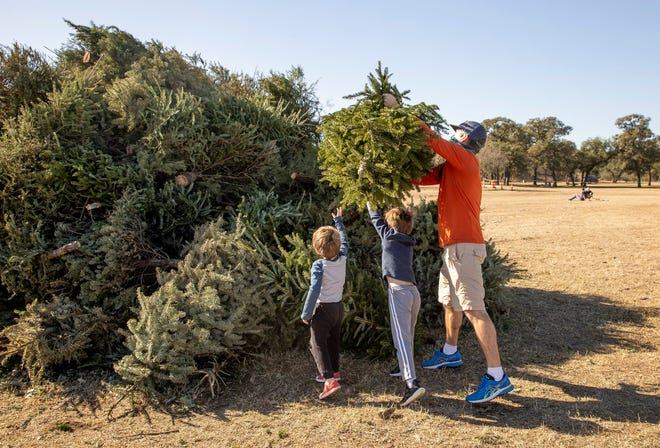 Jeff Livingston and his sons Liam, 4, left, and James, 6, recycle their Christmas tree in Zilker Park on Monday. The trees will be turned into mulch, which will be available for free on a first come, first served basis beginning Jan. 14.