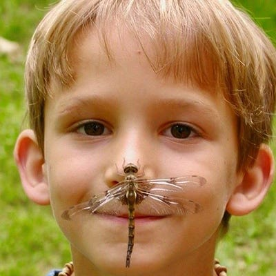 """Alex Newman at age 5, when a dragonfly landed on his nose. He died at 22 after taking fentanyl to ease his anxiety and depression. """"I choose to believe that every time I see a dragonfly, I see a piece of Alex that will live on forever,"""" said his mother, Sheryl Johnson."""