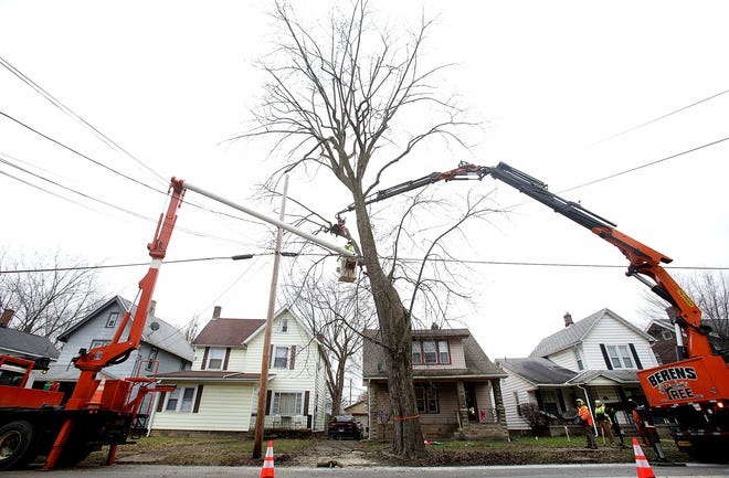 Workers from Berens Tree & Excavating service remove a large tree Tuesday afternoon along Wales Road NE in Massillon. The removal is part of initial work to widen Wales Road between Lincoln Way E and Hills and Dales Road NE.