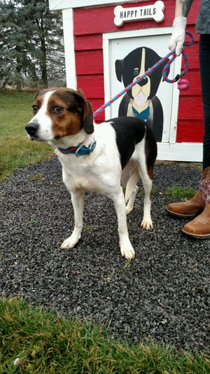 Hatty, who was allegedly abandoned in West Bloomfield, will be adopted out to a new owner.