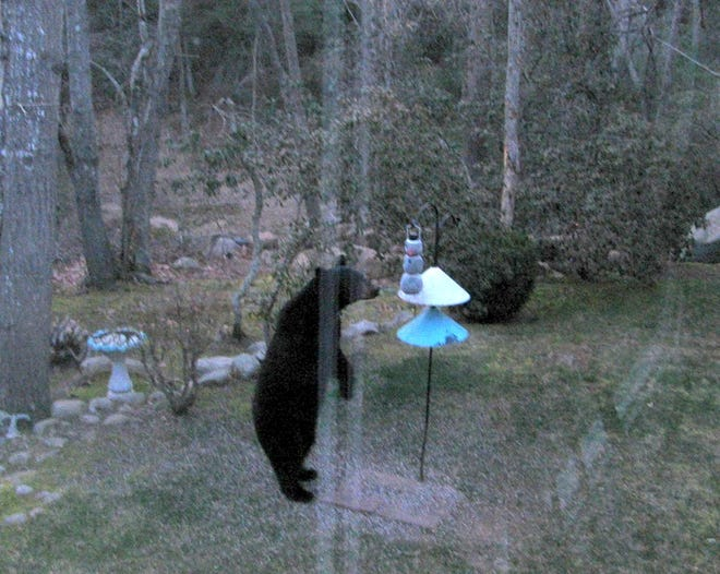 Bird feeders are seen by bears as an open invitation to dine, according to the state Department of Environmental Management, which reports that bear populations are on the rise in Rhode Island.