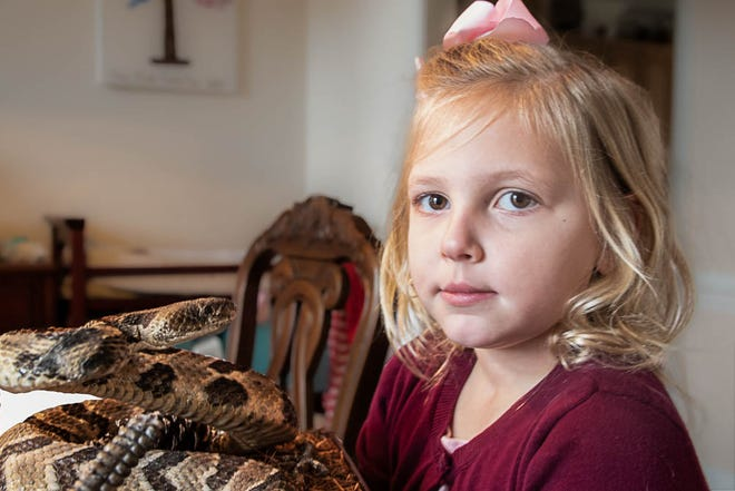 Riley stone stands beside the stuffed rattlesnake whose bite nearly killer her four years ago when she was two. She still faces surgery and tests in her fight to recover fro the experience. [Bill Hand / Sun Journal Staff]