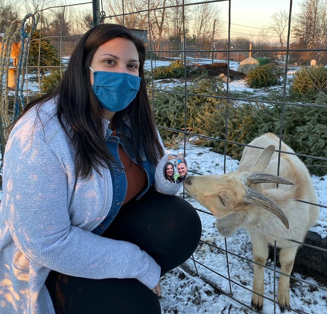 SPENCER - A goat at Hidden Hill Family Farm checks out a Christmas ornament held by Julie Russell of Webster. The ornament commemorates her engagement to her husband, Michael. It was left behind on their tree when they donated it to a local farmer for his goats.