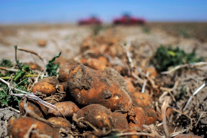 U.S. officials have released a new plan involving methods to deal with a microscopic pest in southeastern Idaho that threatens the state's billion-dollar potato industry that supplies a third of the nation's potatoes.