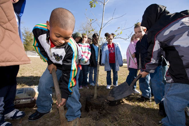 Florida's Arbor Day this year is Friday, Jan. 15. The date is perfect for planting trees in Northeast Florida.