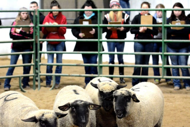 Youths study agriculture at a sheep facility during a pre-COVID class. Mineral County youths can now study agriculture online through a program being offered by WVU Extension.