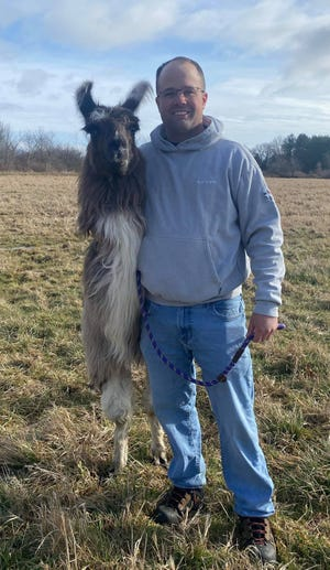 Patrick Boddy found this llama sitting in a field on Hale Street in Newburyport, and now police are looking for the animal's owners.