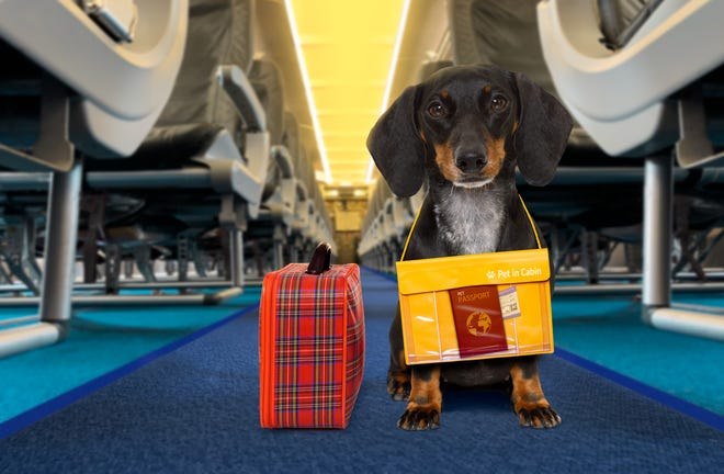Starting Jan. 11, American Airlines passengers traveling with emotional support animals must fly them in the cargo hold or in a crate under their seats and pay a animal transport fee, which start at $125.