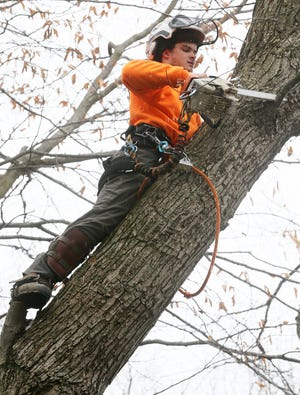 Joe Carnes of Barberton Tree Service trims a tree in the backyard of an Akron home on Thursday, Jan. 7, 2021. Carnes, with help from Barberton Municipal Court and his employer, is working on getting his driver's license back. [Mike Cardew/Beacon Journal]