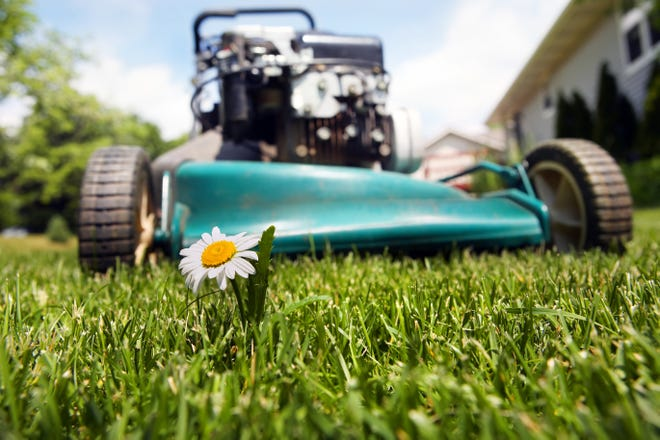 It is ideal to plant sod from mid-spring to early fall, but sometimes that can't happen. When discussing sod for our area, we have four types of commercially available warm season grasses. [DREAMTIME/TRIBUNE NEWS SERVICE]