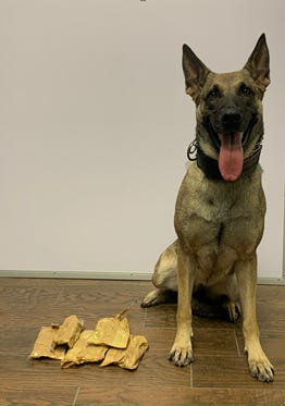A police dog poses next to the items seized during the drug bust.