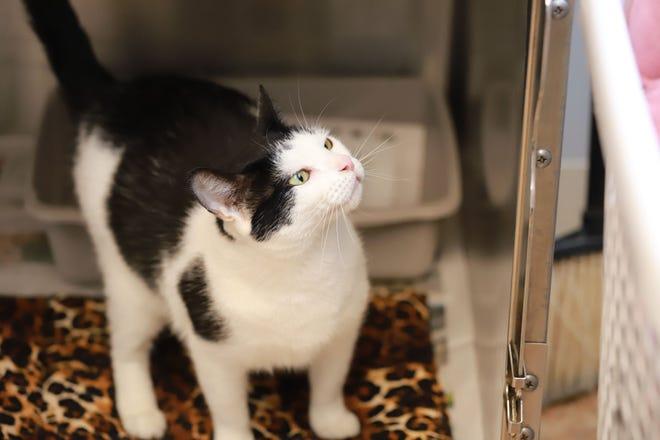 Ellen is up for adoption through EGAPL The Heart of RI Animal Rescue League, in Cranston.