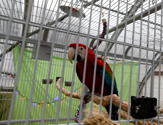 Beech Creek Botanical Garden near Alliance plans a new exhibit for raptors. Here is on the macaws at the site.