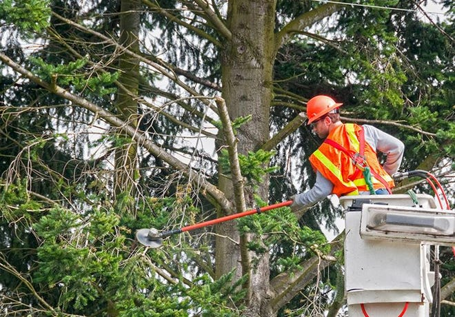 Delmarva Power announced Jan. 7 that, over the next five weeks, contractor Asplundh will perform tree trimming and vegetation management throughout the Rehoboth Beach area, primarily on electric distribution lines from Olive Avenue to Silver Lake, and throughout the town of Dewey Beach.