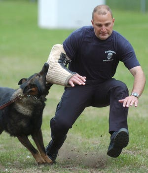 A police officer is taken down by dog during a training exercise.