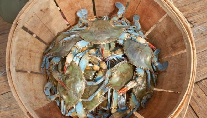 Louisiana hauls in about 82% of all of the blue crabs along the Gulf Coast and 27% of the catch across the U.S., according to the Louisiana Seafood Promotion and Marketing Board.