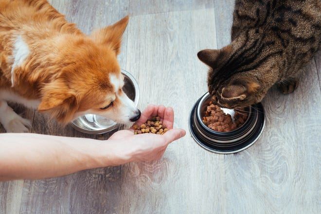 Here are some signs your pet might need different food.